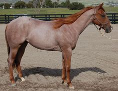red roan                                                                                                                                                                                 Plus