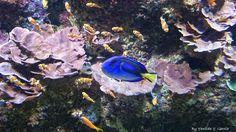 Dónde estás Nemo?
