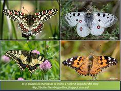 Foto: Te invito a hacerte Seguidor del Blog: http://butterflies-dragonflies.blogspot.com.es/ Disfruta con las Fotografías y Vídeos de Libélulas y Mariposas