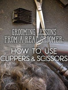 Here, we will be discussing different types of scissors and clippers. I hope you learn a lot about choosing the correct tools for your pet and what is worth your money. There are so many options out there, especially if you start buying from. Goldendoodle Grooming, Dog Grooming Tips, Poodle Grooming, Dog Grooming Business, Dog Grooming Scissors, Dog Grooming Styles, Havanese Dogs, Corgi Puppies, Pomeranian Haircut