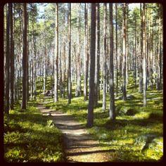Metsä- Forest