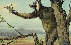 "Tokandia- Madagascar cryptid: a bear sized lemur that is thought to be a relic individual of the ""extinct"" koala lemur Megaladapis edwardsi. Locals describe that it moves about in a galloping loping. It also cries in a very man-like way."
