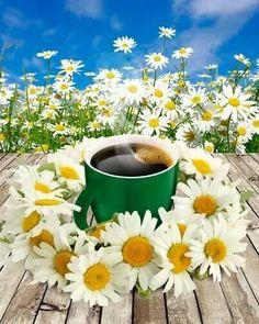 Good Morning Coffee Gif, Good Morning Images Hd, Good Morning Funny, Morning Humor, Good Morning Quotes, Godiva Chocolatier, Happy Wednesday, Image Hd, Daisy