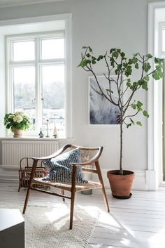 Loving that arm chair! Indoor plants, tiny tree, wooden arm chair, minimalist home, cozy living room Home Living Room, Interior, Minimalist Living Room, Home Decor, House Interior, Interior Design, Home And Living, Minimalist Home, Living Room Decor Inspiration