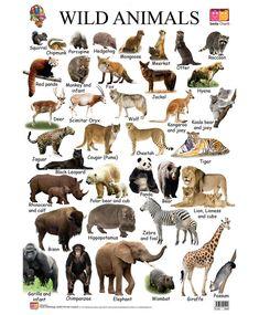 Wild animals list, animals name list, wild animals pictures, animals name with picture Animals Name List, Animals Name With Picture, Wild Animals List, Animals Name In English, Cute Animals, Baby Animals, Animals And Pets, Animal Pictures For Kids, Wild Animals Pictures