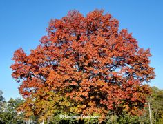 Beautiful Fall Foliage in Oradell New Jersey