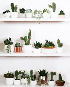 Room With Plants, House Plants Decor, Fake Plants, Plant Decor, Paper Succulents, Cacti And Succulents, Indoor Cactus, Indoor Plants, Paper Cactus