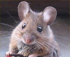 ねずみ (nezumi) (mouse)