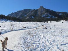 Dog takes in the scenery on Flatiron Mesa Trail Boulder CO