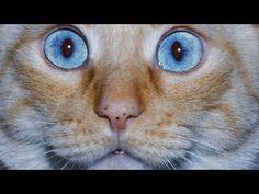 5 Purrrrfect Cat Hacks - I Heart Pets