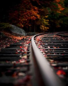 Check out this fine nature photography art! Autumn Photography, Creative Photography, Amazing Photography, Art Photography, Beautiful Landscape Photography, Railroad Photography, Photo Background Images, Photo Backgrounds, Foto Picture