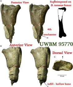 Details of the partial left femur of the Washington State dinosaur fossil, but which U.S. States don't have dinosaur fossils?