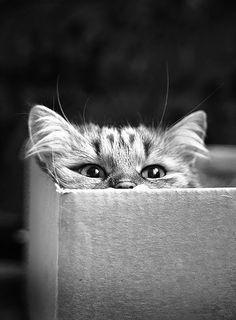 ♔ Cat in a box