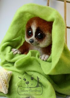 Slow loris by by my-sherri