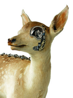 In an odd mix of natural and industrial design, New Zealand-based artist Lisa Black amalgamates taxidermy animals with mechanical parts to create these bizarre sculptures.
