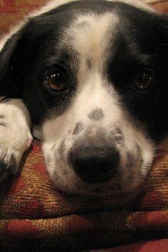 Cute Dog!   Flickr - Photo Sharing!