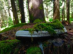 Old shoe found at a backwoods campground near Easton Wa