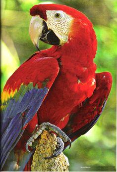 Parque das Aves Arara Vermelha