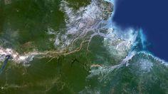 El inesperado arrecife de coral de 1.000 kilómetros descubierto en la boca del Amazonas