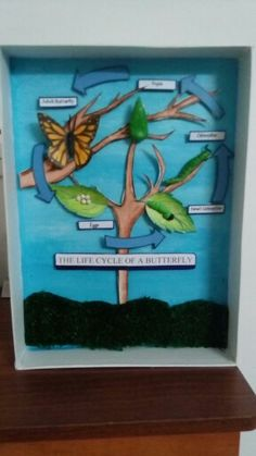 DIY Butterfly life cycle diorama inspired by a butterfly shadow box. Using cardboard box, craft paper and clay.  Perfect for kids projects!