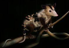 Didelphis Marsupialis - Didelphis Marsupialis Mammals, Kangaroo, Animales, Illustrations, Art, Naturaleza, Science, Baby Bjorn