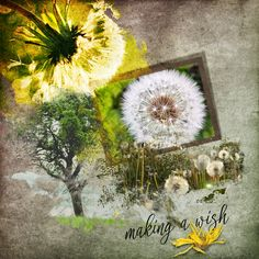 """""""FIELD OF WISHES"""" Collection by The Urban Fairy available @ Digital Scrapbooking Studio https://www.digitalscrapbookingstudio.com/digital-art/bundled-deals/field-of-wishes-collection/ Photo by Pixabay - no attribution required http://pixabay.com/"""