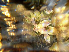 """""""In the Lotus Land"""" from the series """"CrystalArt"""""""