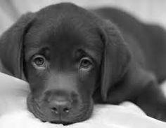 cani cuccioli teneri - Cerca con Google