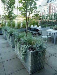 Wood planters painted slate grey, Calamagrostis acutiflora (the tall grasses like soldiers in the background) In NYC, blooms early & stays through winter. (photo Susan Curtis)