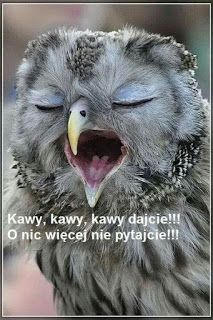 GIFY I OBRAZKI: NA WESOŁO Weekend Humor, Dad Jokes, Morning Images, Man Humor, Good Morning, Cool Pictures, Bird, Funny, Animals