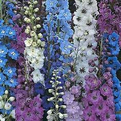 inkspired musings: A sunny Delphinium July Day