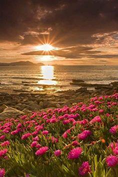 ༺✤ a touch of magic ✤༻ ❤  ***Beautiful Sunrise!***