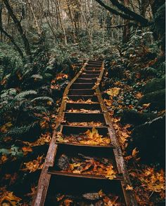 Stairway to heaven, probably.⠀ Photo by Joey Chapman⠀. - 1001 Days in the Boonies wedding veil photography Fall Pictures, Pretty Pictures, Group Pictures, Autumn Aesthetic, Aesthetic Yellow, Stairway To Heaven, Autumn Photography, Autumn Inspiration, Aesthetic Pictures