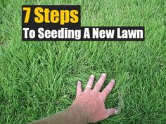 7 Steps to Seeding a New Lawn,garden,gardening,how to,DIY,homesteading,homestead,frugal,green grass, how to reseed a lawn, reseed lawn, scotts lawn,
