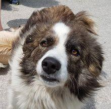 Mary Hund Mischlingshund In Griechenland Tierheim Tiere Hunde