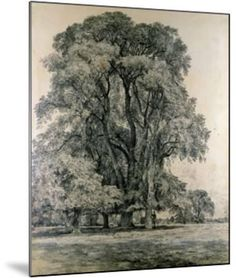 Elm Trees in Old Hall Park, East Bergholt, 1817 Giclee Print by John Constable | Art.com Reproduction Prints, Digital Pics, Tree Drawings Pencil, Victoria And Albert Museum, Frame My Photo, Giclee, Framed Artwork, Tree Drawing, Giclee Print