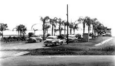 Automobiles parked at Wooten Park - Tavares, Florida 1950