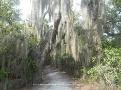 Tree lined trails at Weedon Island Preserve -St. Petersburg, Florida