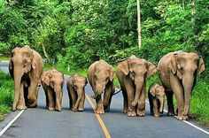 here's a traffic jam I'd love to see so so sooo much! 7 elephants!