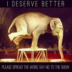 Say no to circuses with animals.