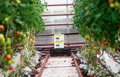 Murcia es la comunidad con mayor proporción de superficie de cultivo destinada a agricultura ecológica