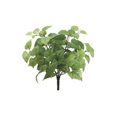 "16"" Potato Leaf Silk Plant -76 Leaves -Light Green ($67) ❤ liked on Polyvore featuring home, home decor, floral decor, artificial silk plants, fake plants, leaf home decor, faux plants and mint green home decor"