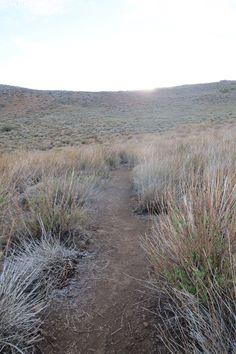 Coirón Spp camino al cerro Carpa