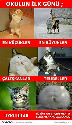 23 Caps Describing Day of School Opening- Okulların Açıldığı Günü Birebi Animal Jokes, Funny Animals, Cute Animals, Funny Shit, Hilarious, Comedy Pictures, Funny Pictures, Haha, Gatos Cat