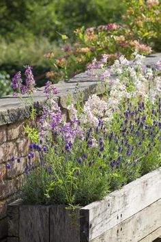Grow Together: Lavender & Schizanthus