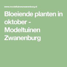 Bloeiende planten in oktober - Modeltuinen Zwanenburg