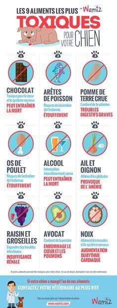 Les 9 aliments les plus toxiques pour votre chien : Chocolat, os de poulet cuits, ail et oignons, avocat, arêtes de poisson, raisin et groseilles, noix, alcool.