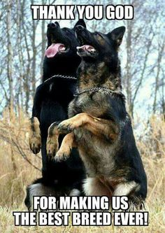 "Click visit site and Check out Best ""German Shepherd"" T-shirts. This website is top-notch. Tip: You can search ""your name"" or ""your favorite shirts"" at search bar on the top."