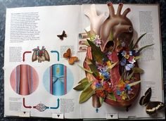 Butterflies Ben Giles Anatomy book