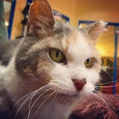 Chloe and her wild #whiskers wish you joy and adventure today. #cat #catstagram #cats_of_instagram #catsofinstagram #calico #senior